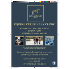 A5 print advertisement (Bellevue Veterinary Clinic)